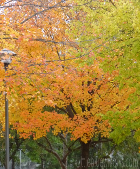 changing leaves oct 13