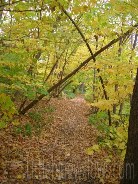 ms river path 2