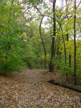 ms river path 3