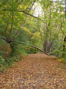 ms river path 4