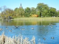 loring park lake