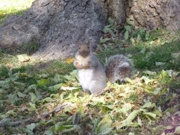 squirrel10