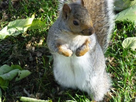 squirrel7